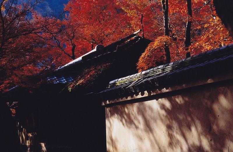 Arashiyama_0002